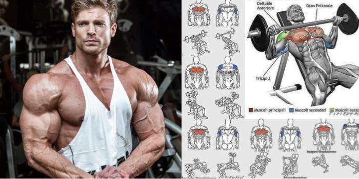 Rutina De Pectorales Y Tríceps Para Volumen Adictos Al Gym